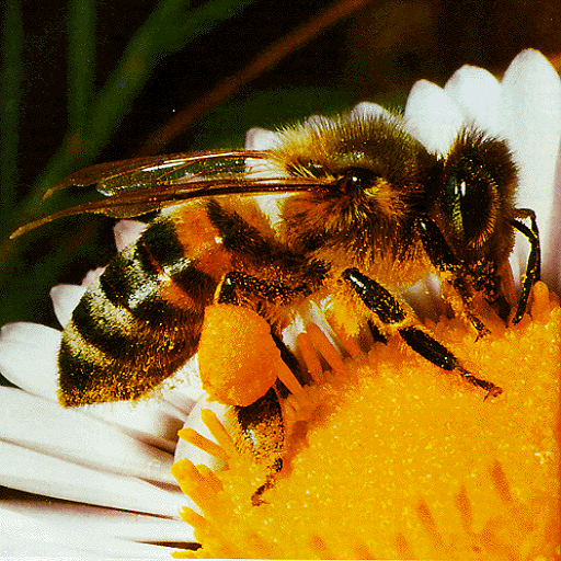 راهنمای پرورش زنبور عسل